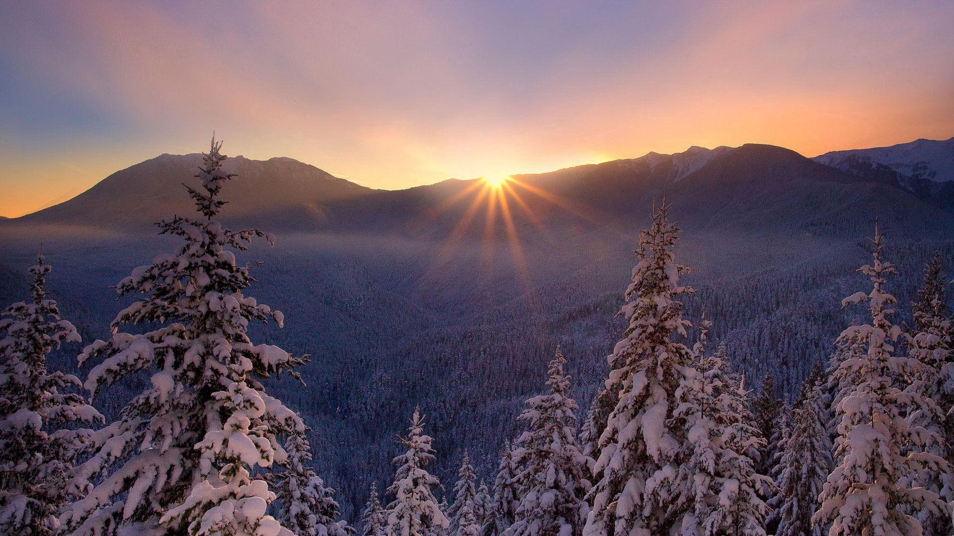 137660 скачать обои Снег, Природа, Мороз, Закат, Лесогорье, Красивый, Зима, Елки - заставки и картинки бесплатно