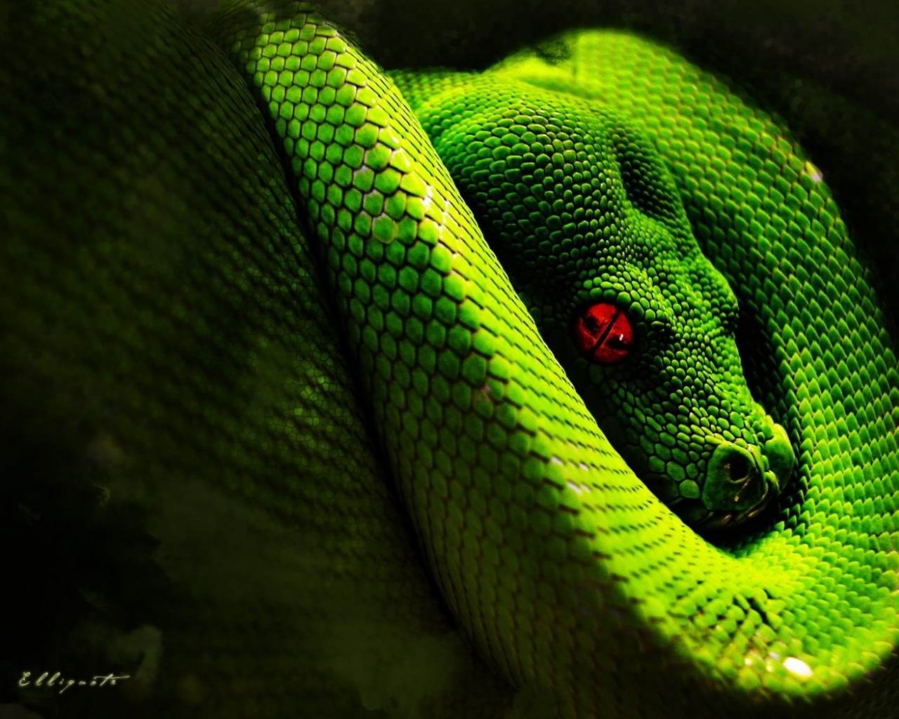 8389 download wallpaper Animals, Snakes screensavers and pictures for free