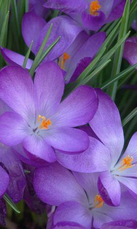 35485 descargar fondo de pantalla Plantas, Flores: protectores de pantalla e imágenes gratis