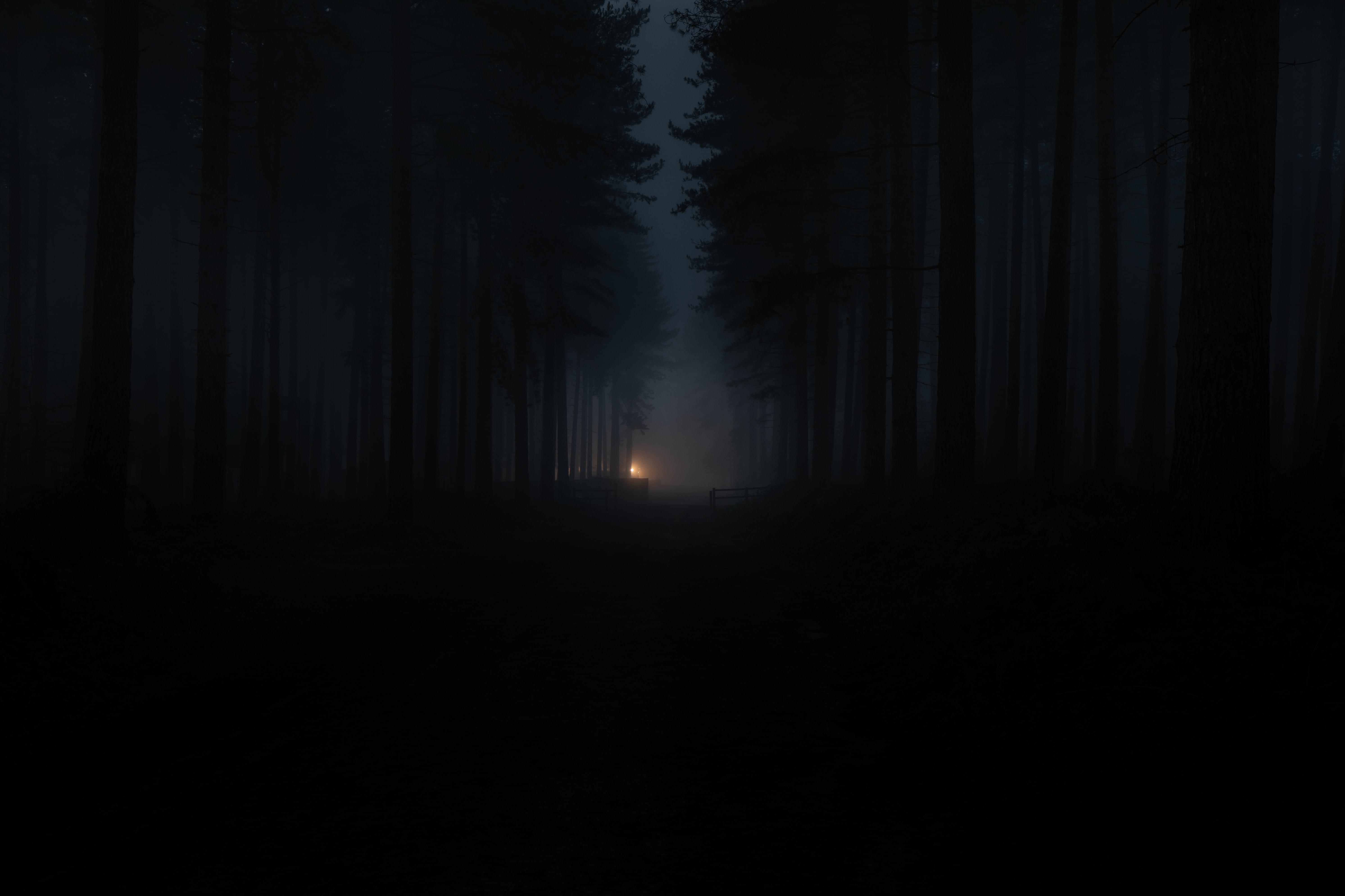 54276 скачать обои Темнота, Темные, Лес, Туман, Мрак - заставки и картинки бесплатно