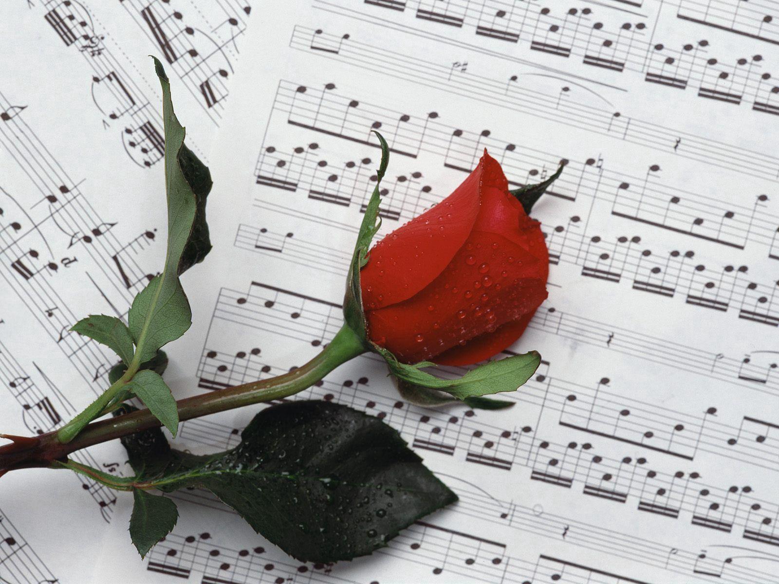 95823 скачать обои Музыка, Цветы, Капли, Цветок, Роза, Ноты - заставки и картинки бесплатно
