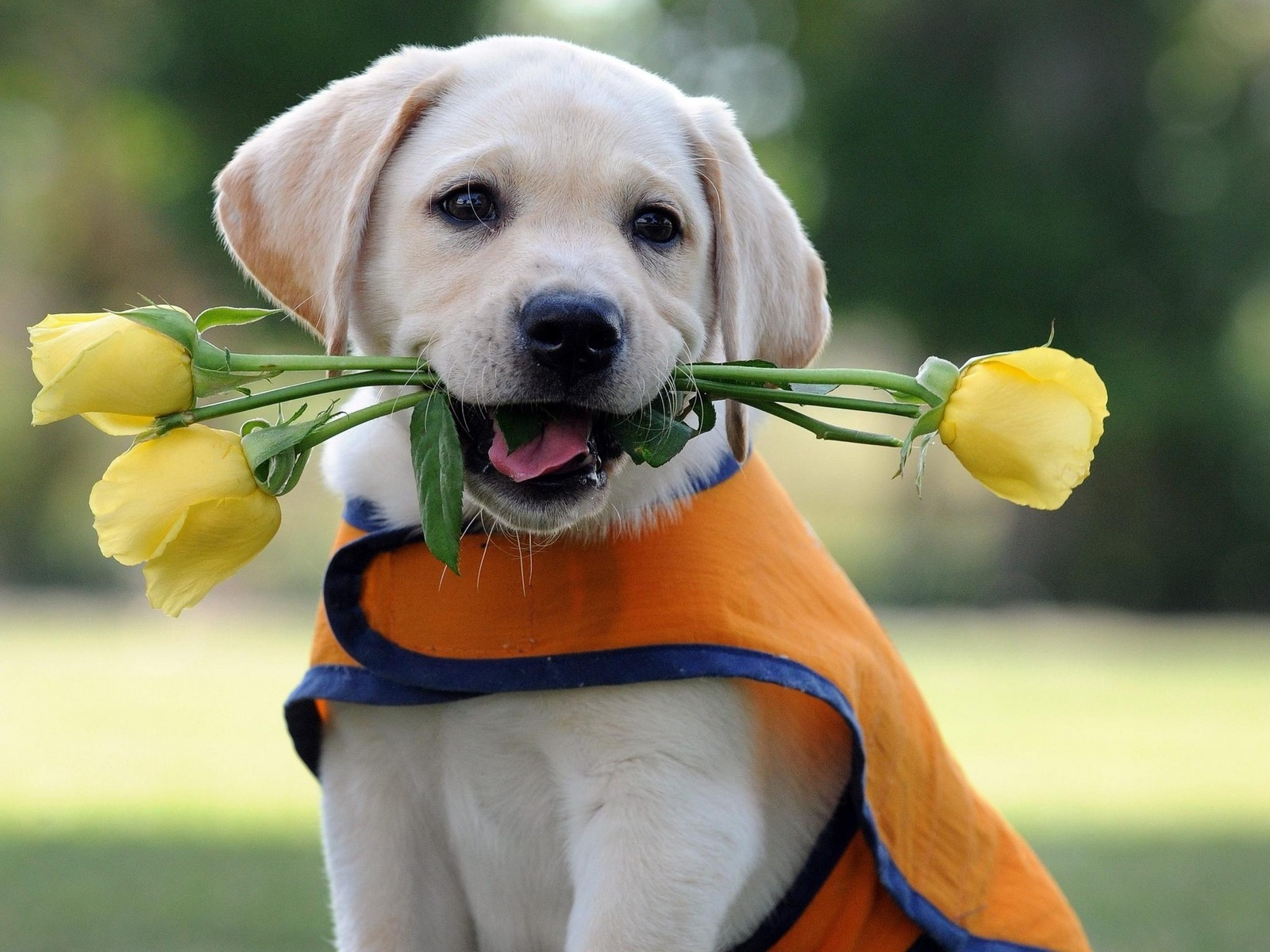 19052 download wallpaper Animals, Dogs screensavers and pictures for free