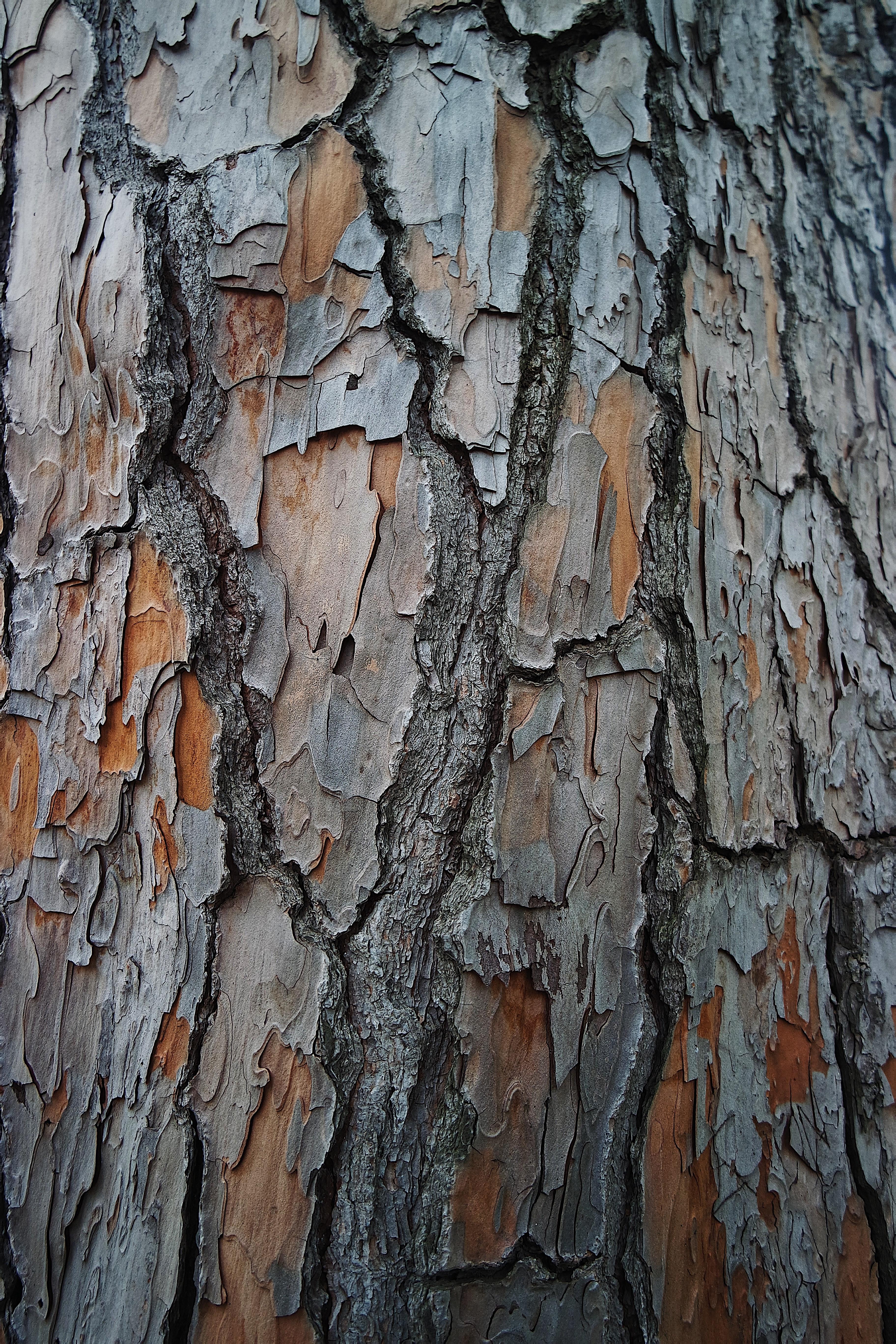 61456 Protetores de tela e papéis de parede Texturas em seu telefone. Baixe Texturas, Madeira, Árvore, Textura, Superfície, Latido, Casca fotos gratuitamente