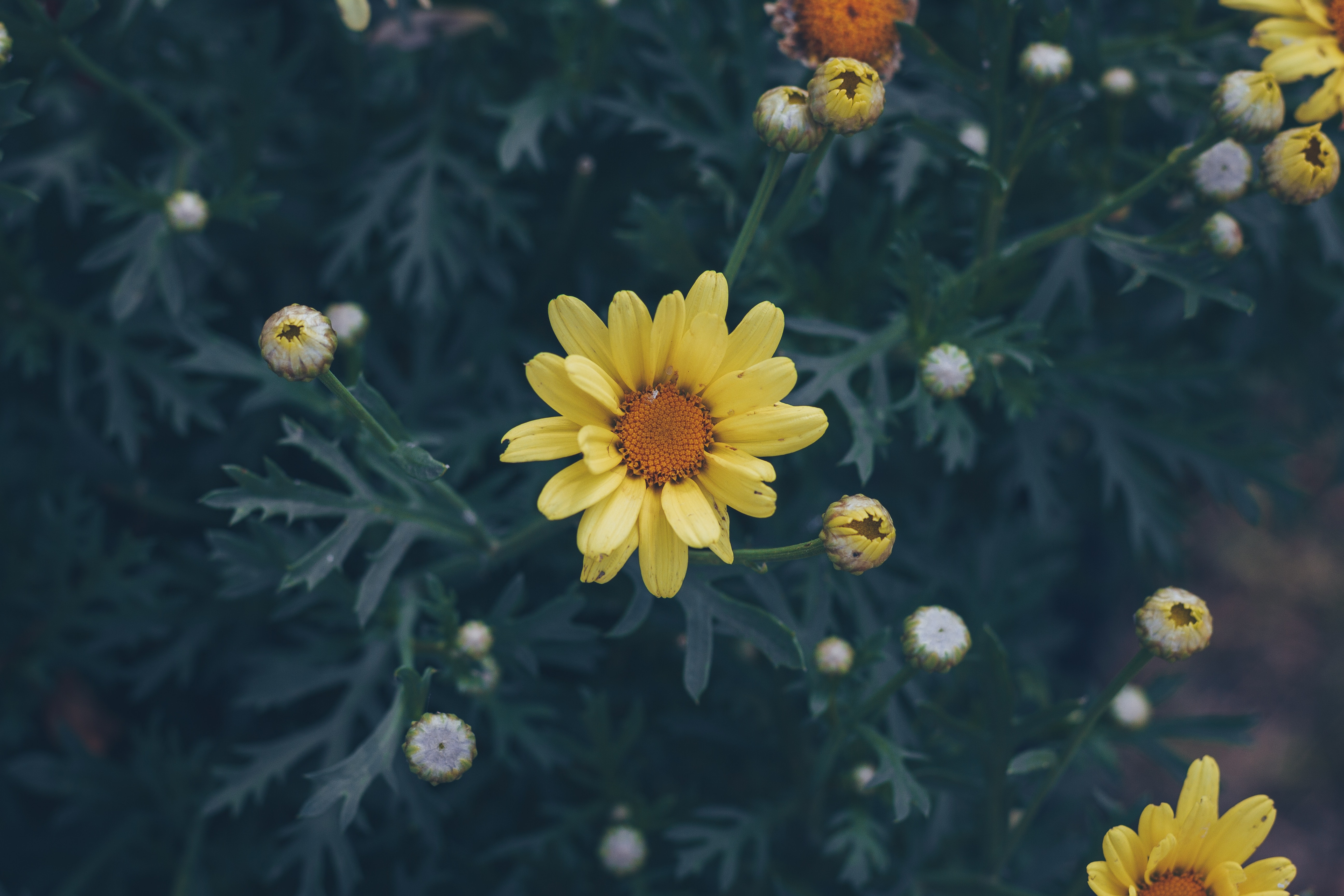 141136 Screensavers and Wallpapers Flower Bed for phone. Download Flowers, Flower, Blur, Smooth, Flower Bed, Flowerbed pictures for free