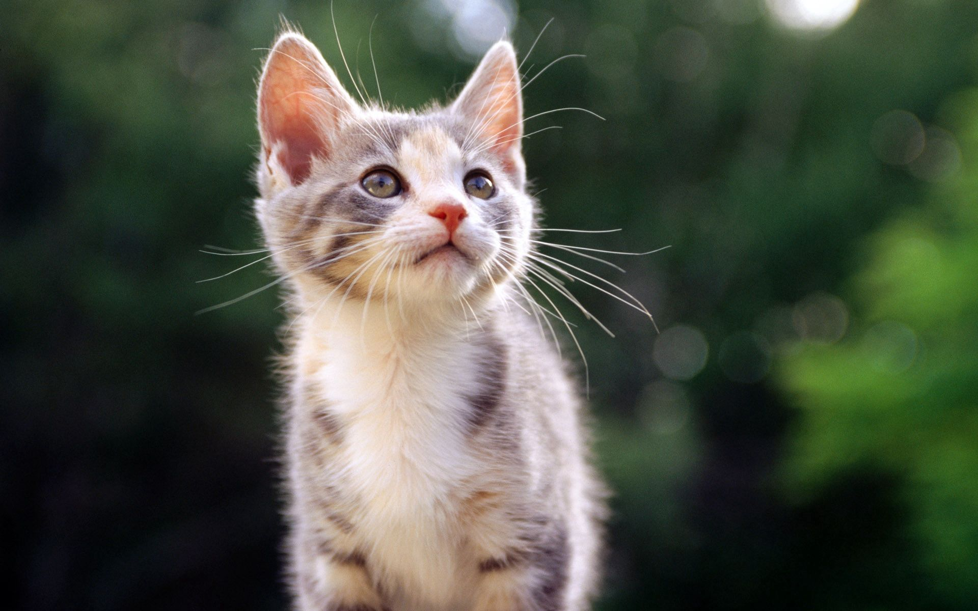 139261 Screensavers and Wallpapers Kitten for phone. Download Animals, Kitty, Kitten, Striped, Kid, Tot pictures for free