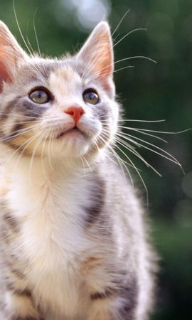 139261 download wallpaper Animals, Kitty, Kitten, Kid, Tot, Striped screensavers and pictures for free