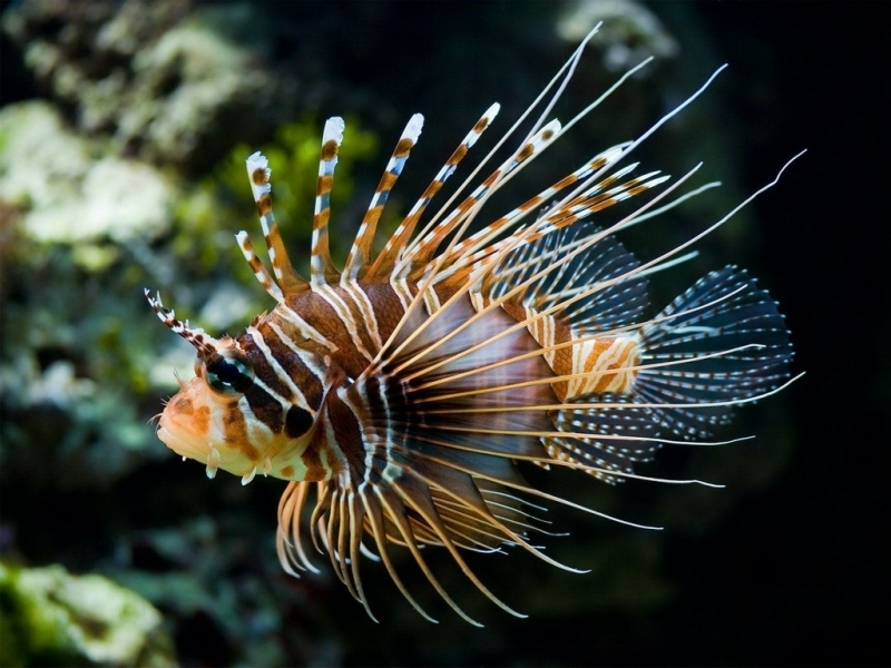 31944 download wallpaper Animals, Fishes screensavers and pictures for free