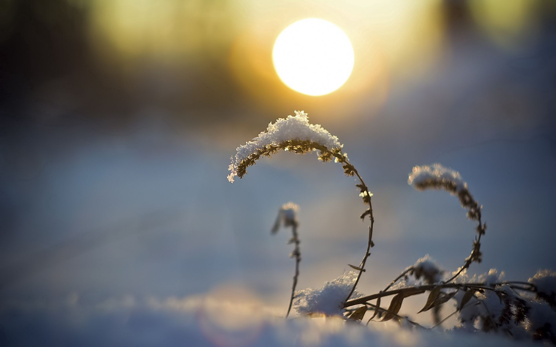 97293 download wallpaper Nature, Blade Of Grass, Blade, Snow, Sunset, Disk, Sun screensavers and pictures for free