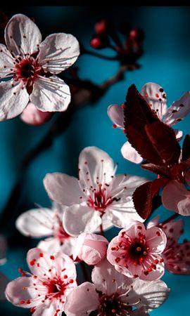 43189 télécharger le fond d'écran Plantes, Fleurs - économiseurs d'écran et images gratuitement