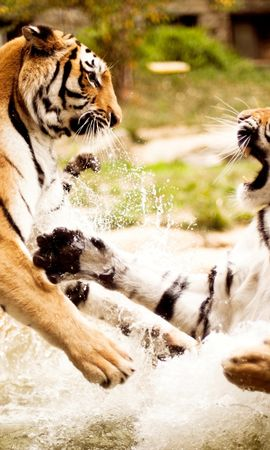 130980 download wallpaper Animals, Couple, Pair, Fight, Water, Aggression, Predator, Tigers screensavers and pictures for free