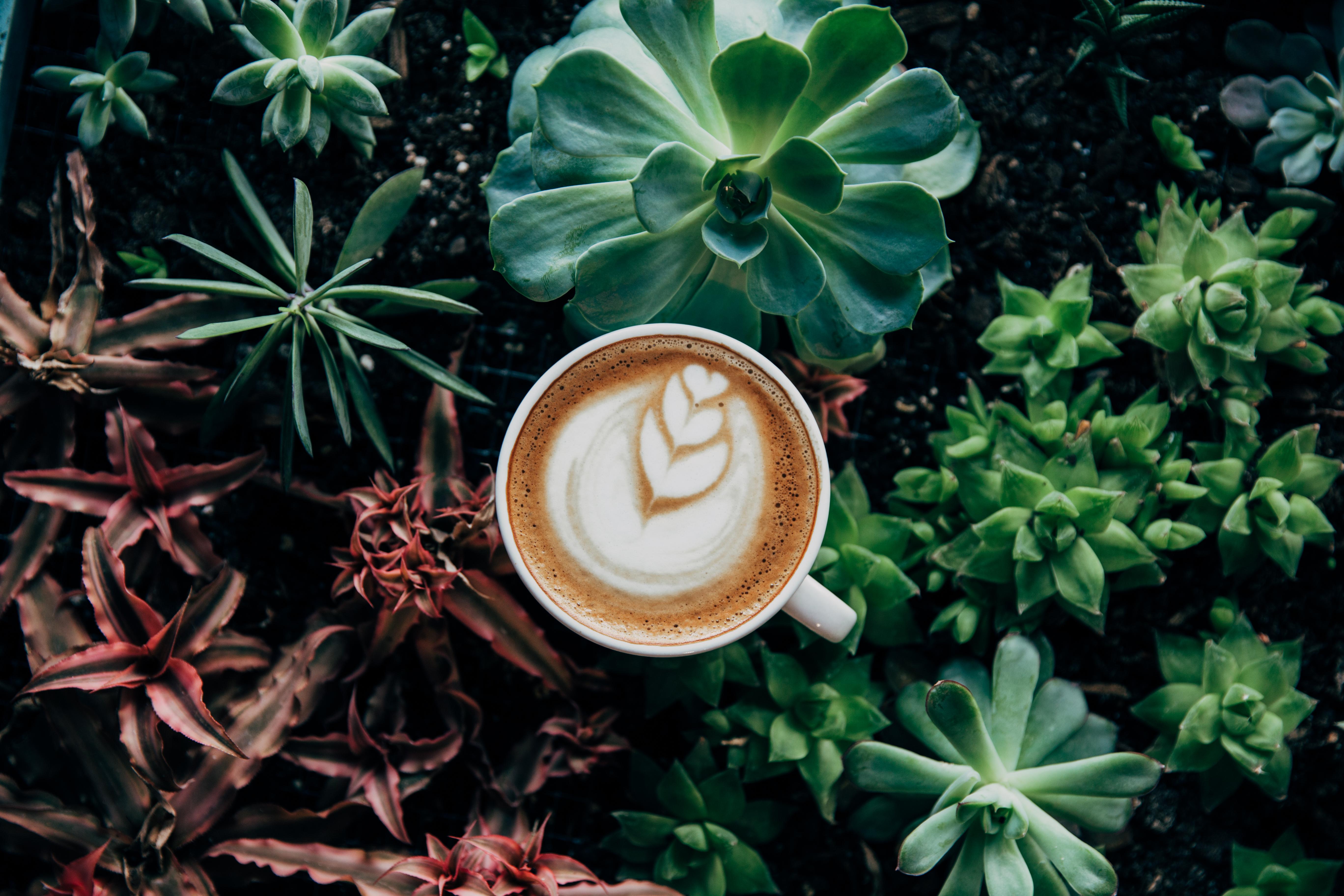 137802 скачать обои Еда, Кофе, Пенка, Растения - заставки и картинки бесплатно