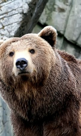 39541 baixar papel de parede Animais, Bears - protetores de tela e imagens gratuitamente