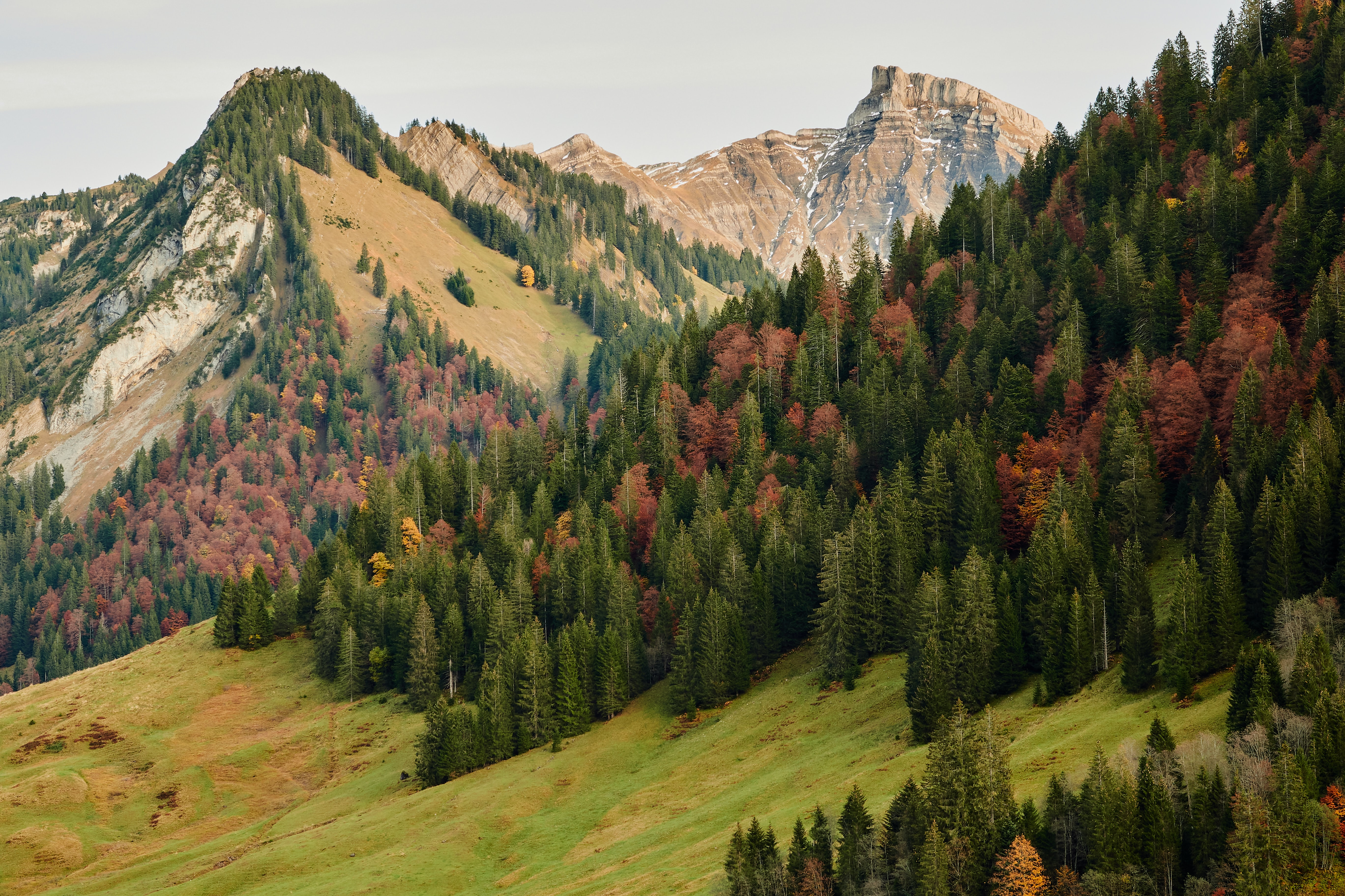 127957 download wallpaper Nature, Trees, Mountains, Autumn, Forest, Slope screensavers and pictures for free