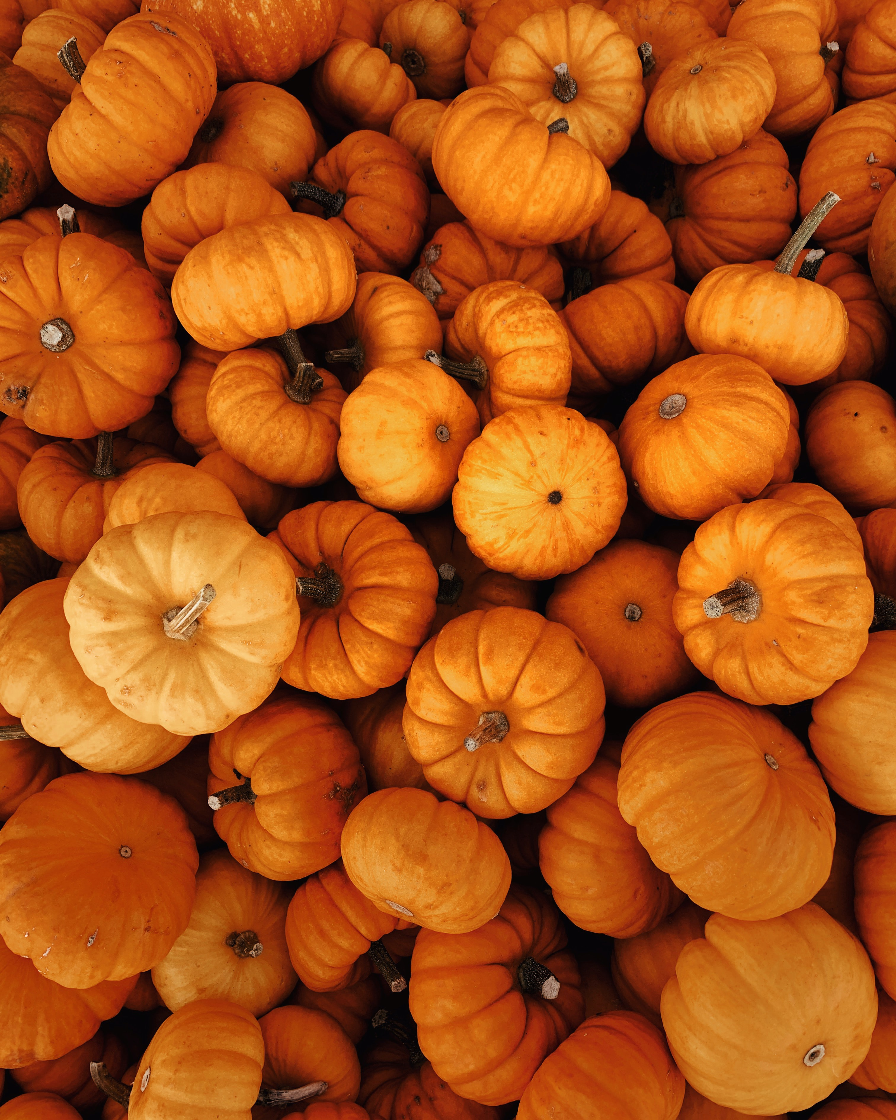 120021 download wallpaper Miscellanea, Miscellaneous, Autumn, Halloween, Harvest, Vegetables, Pumpkin screensavers and pictures for free