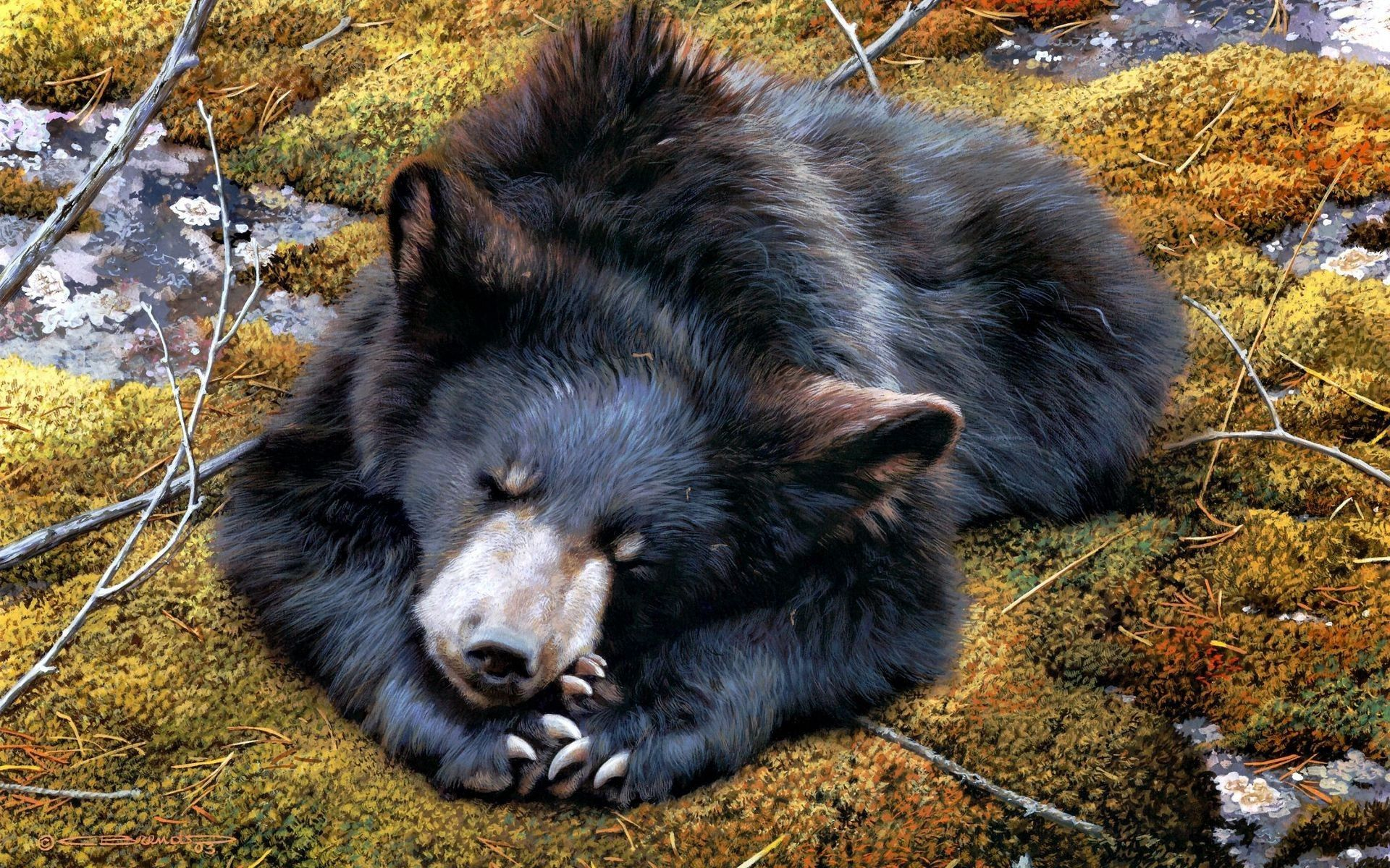 94948 download wallpaper Animals, Bear, To Lie Down, Lie, Moss, Variety screensavers and pictures for free