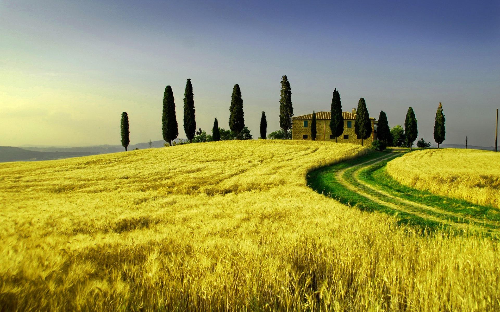 12432 скачать обои Пейзаж, Поля, Пшеница - заставки и картинки бесплатно