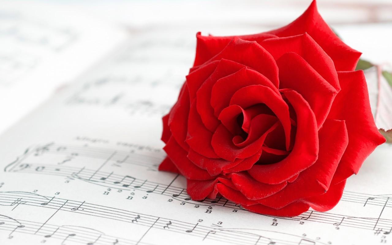 19069 скачать обои Музыка, Растения, Цветы, Розы - заставки и картинки бесплатно