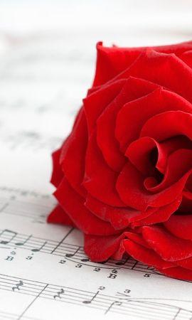 19069 baixar papel de parede Música, Plantas, Flores, Rosas - protetores de tela e imagens gratuitamente