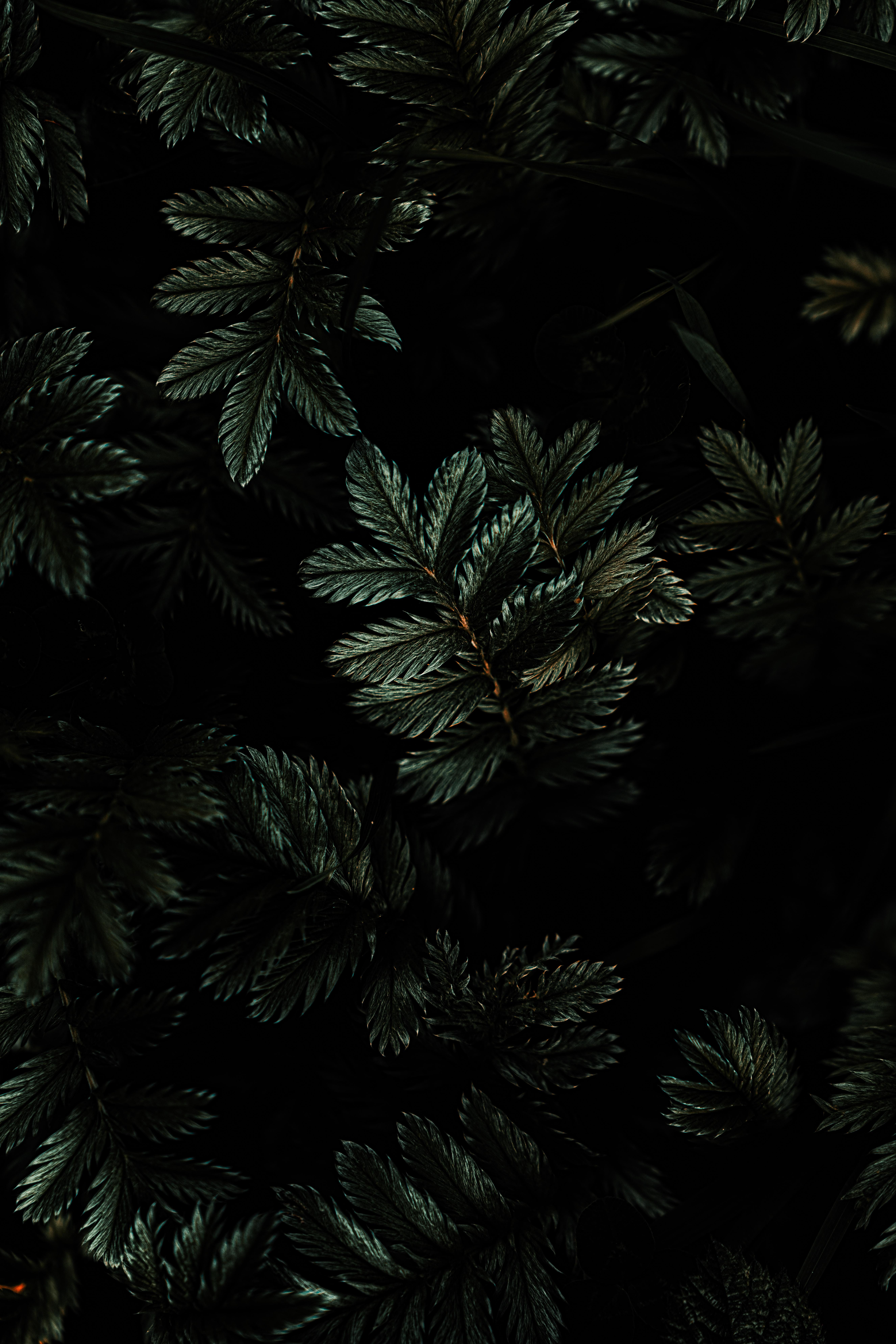 58146 Заставки и Обои Темные на телефон. Скачать Темные, Темный, Листья, Растение, Ветки, Зеленый картинки бесплатно