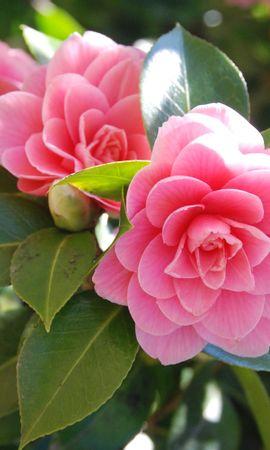 25532 скачать обои Растения, Цветы - заставки и картинки бесплатно