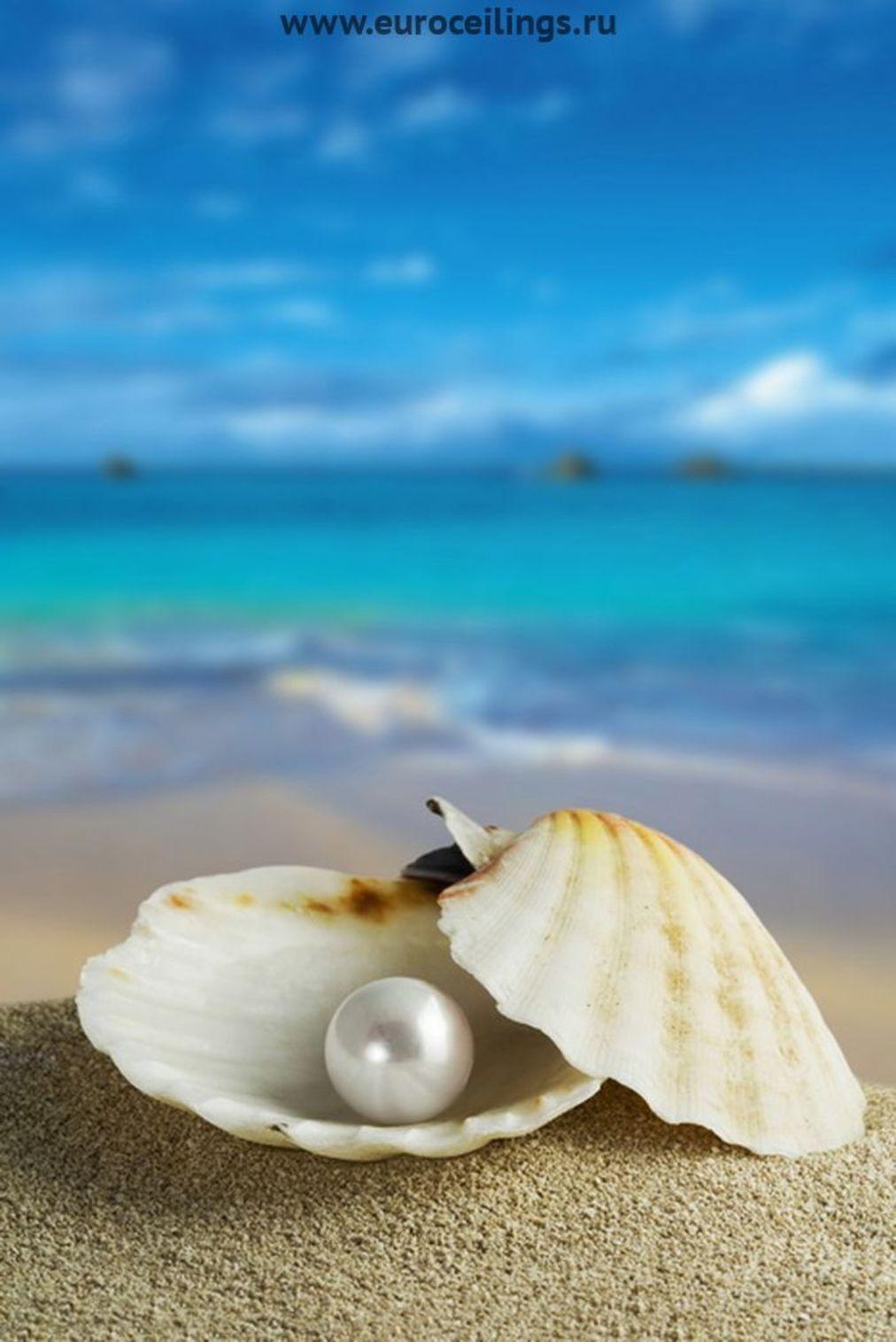 14606 скачать обои Жемчужины, Фон, Море, Ракушки - заставки и картинки бесплатно