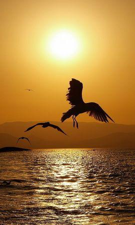 22977 скачать обои Животные, Пейзаж, Птицы, Закат, Море - заставки и картинки бесплатно