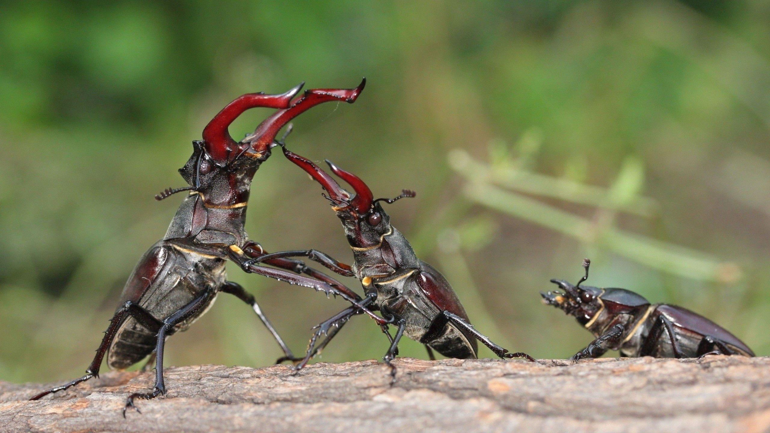 89509 Salvapantallas y fondos de pantalla Insectos en tu teléfono. Descarga imágenes de Macro, Insectos, Pareja, Par, Hierba, Insecto gratis