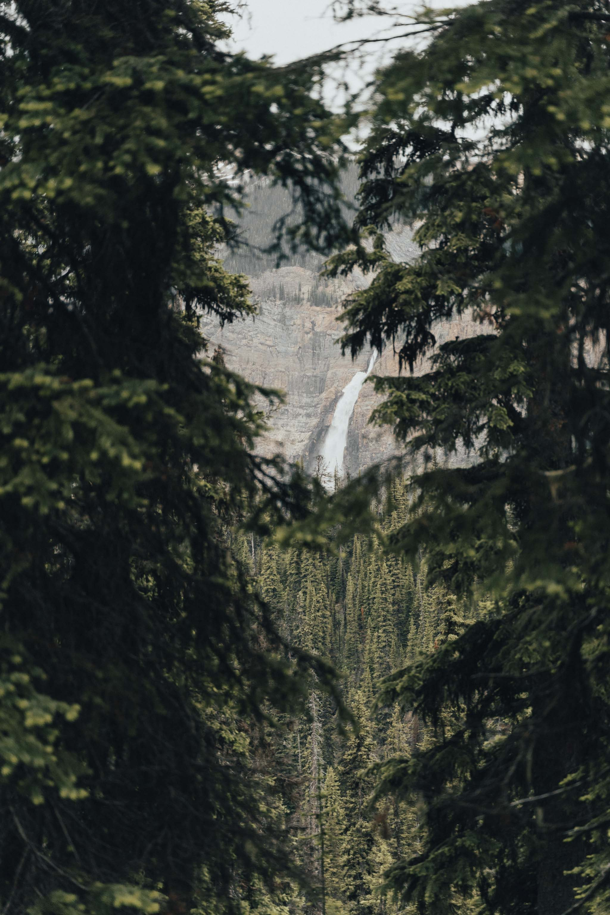 156706 download wallpaper Nature, Waterfall, Branches, Spruce, Fir, Rocks, Trees screensavers and pictures for free