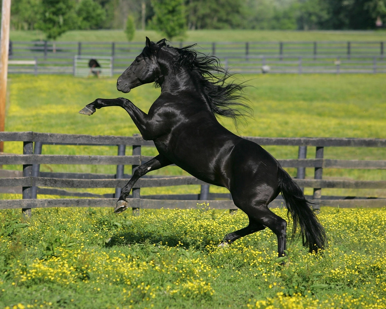 2366 download wallpaper Animals, Horses screensavers and pictures for free