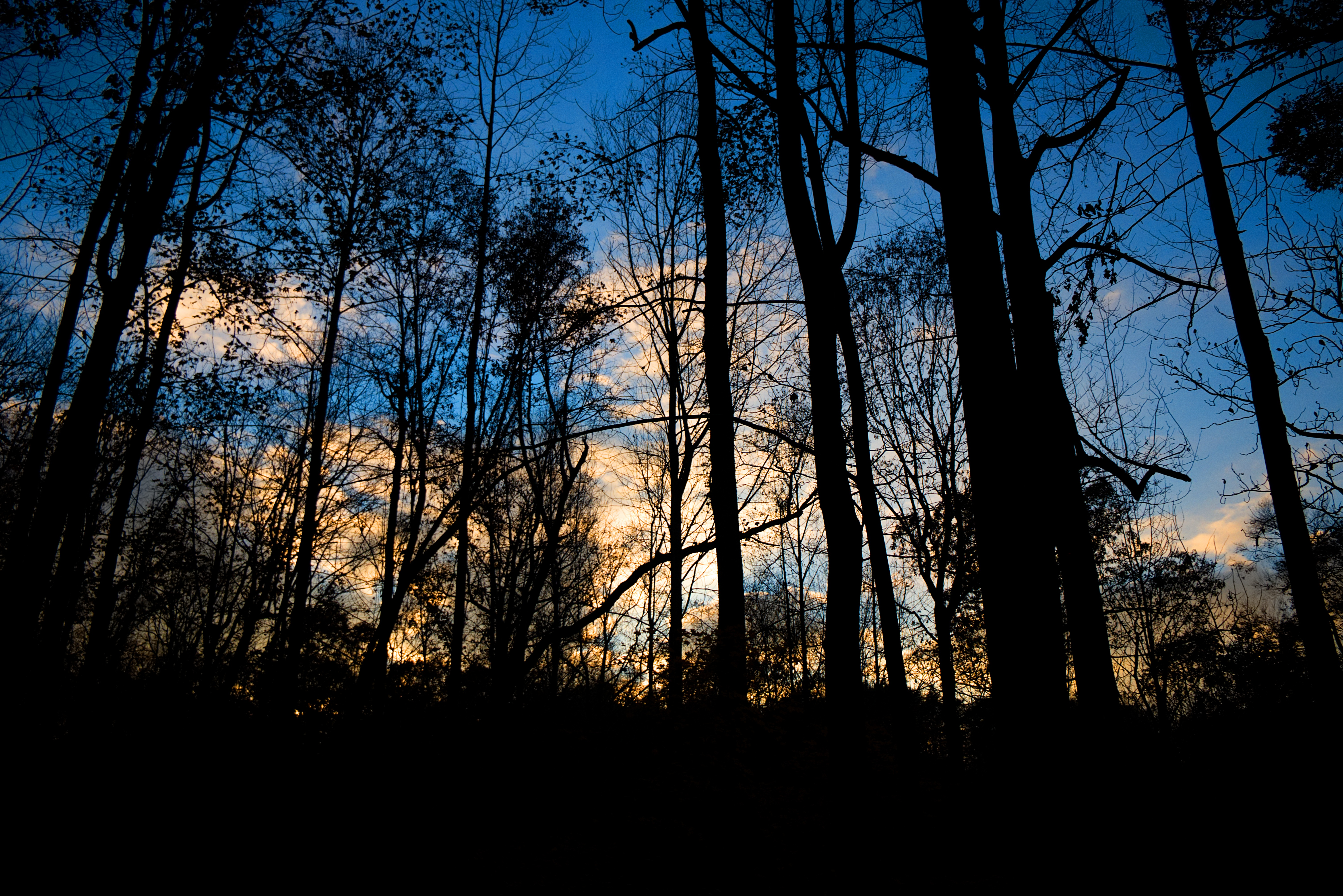 61551 Screensavers and Wallpapers Twilight for phone. Download Trees, Twilight, Dark, Forest, Dusk, Evening pictures for free