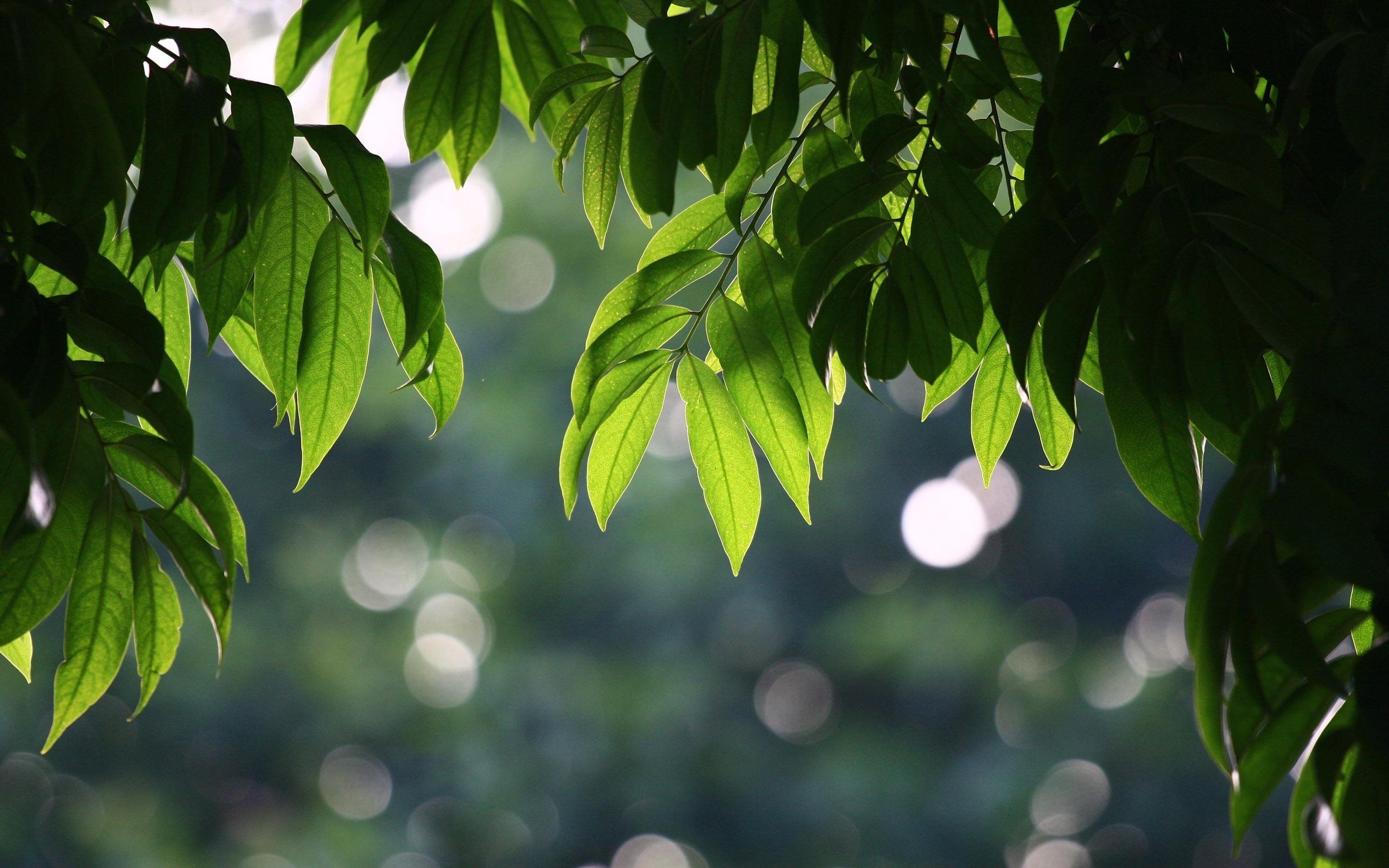 23429 скачать обои Растения, Пейзаж, Деревья, Листья - заставки и картинки бесплатно
