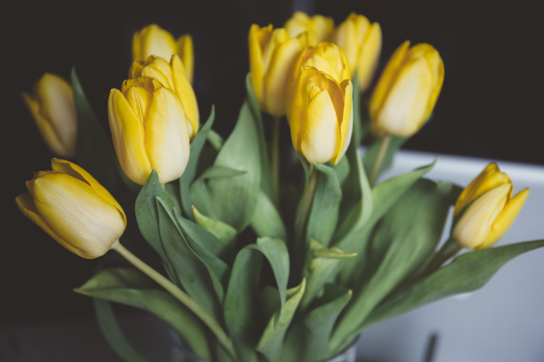 65392 descargar fondo de pantalla Flores, Ramo, Tulipanes: protectores de pantalla e imágenes gratis