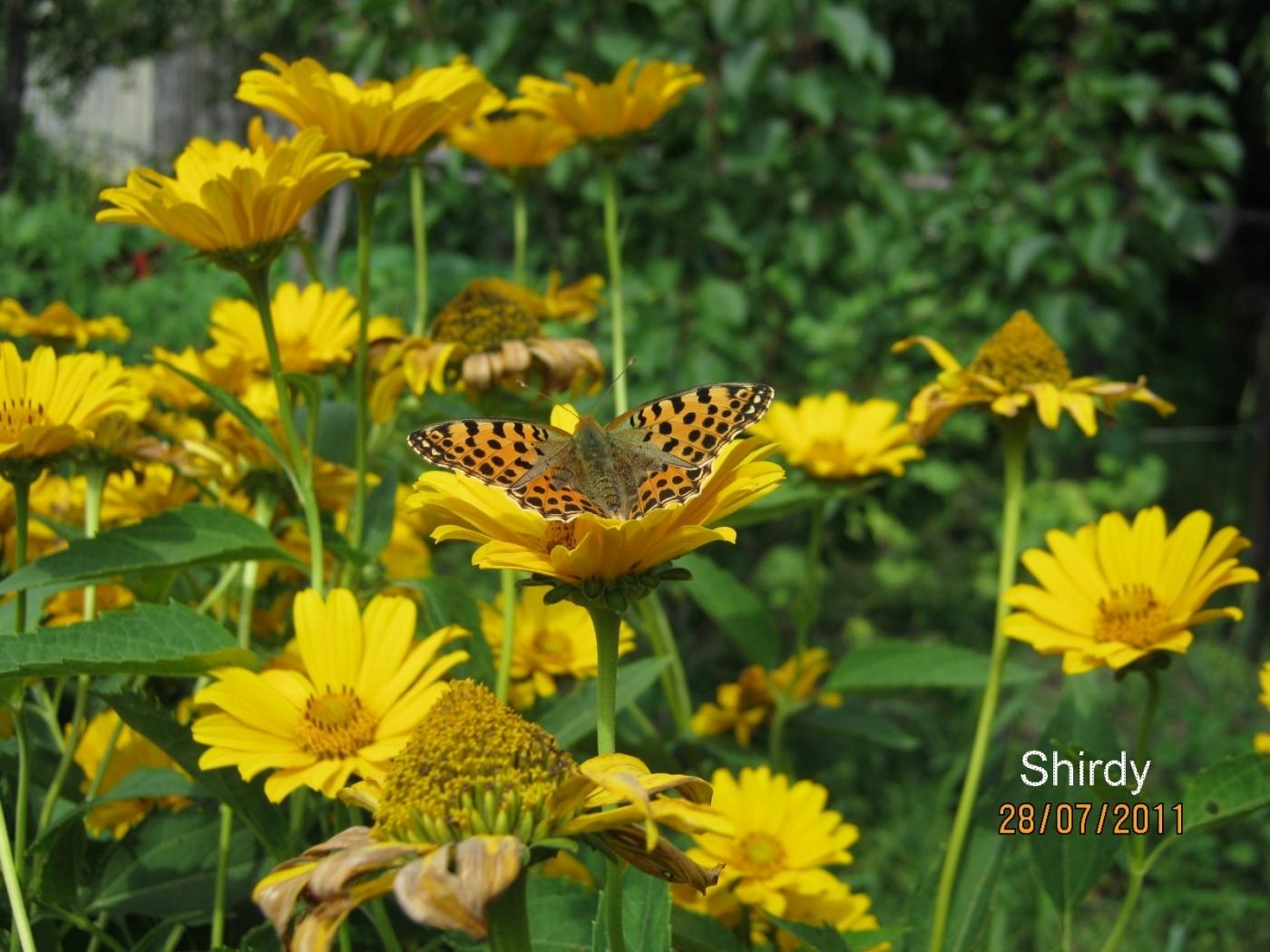 23938 скачать обои Бабочки, Цветы, Насекомые - заставки и картинки бесплатно