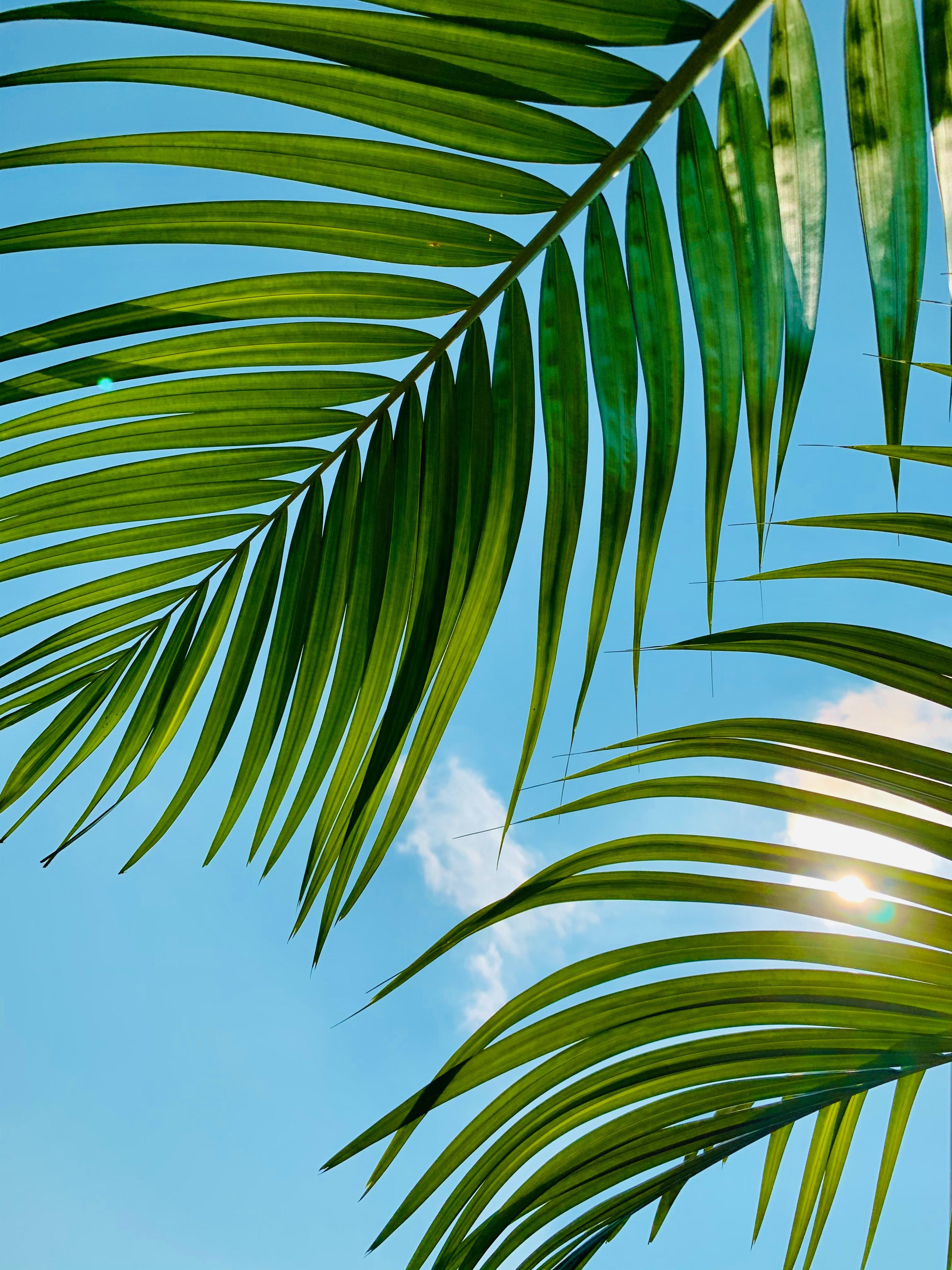 122059 скачать обои Природа, Пальма, Листья, Небо, Облака - заставки и картинки бесплатно
