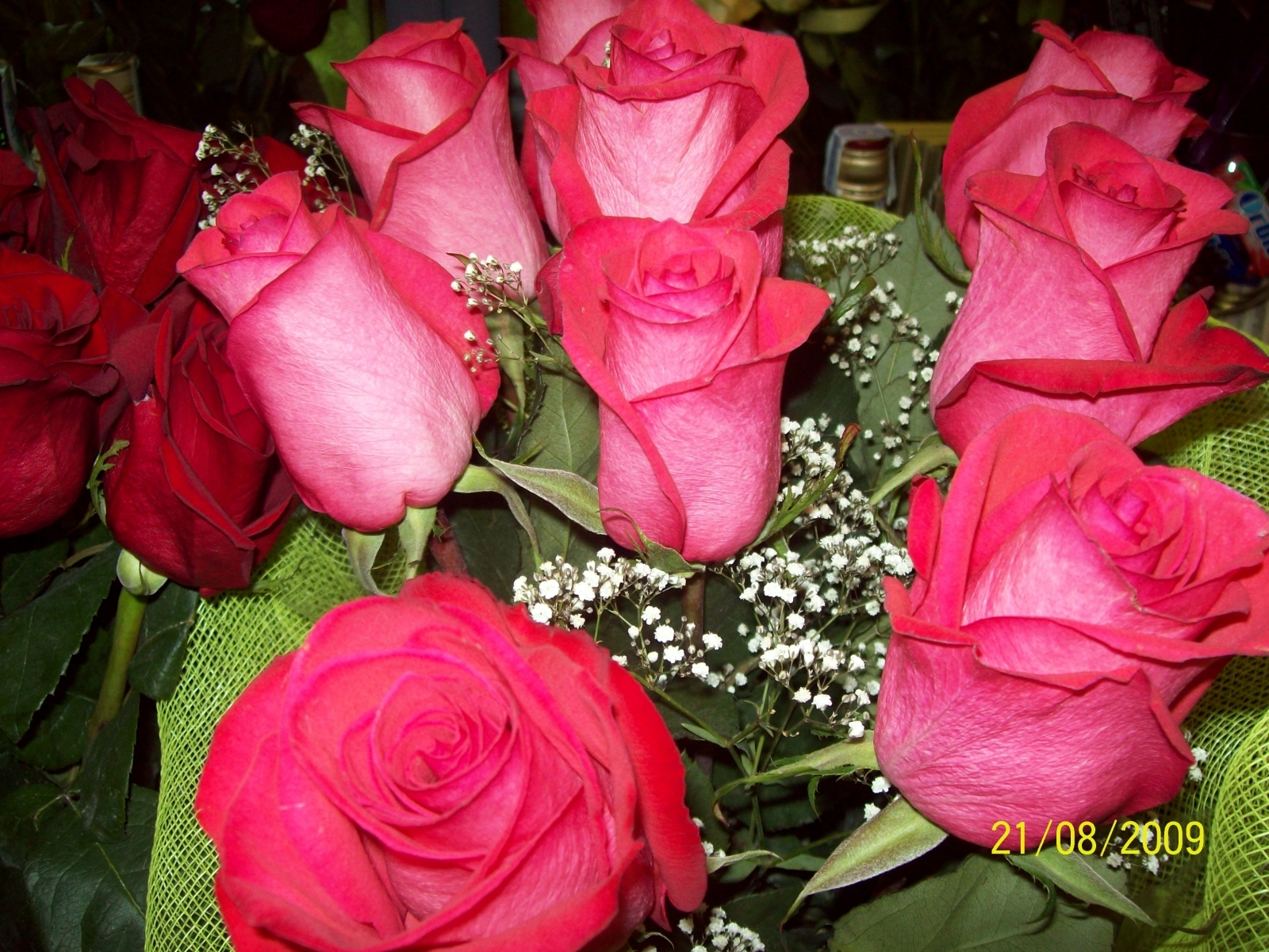 2734 скачать обои Растения, Цветы, Розы - заставки и картинки бесплатно