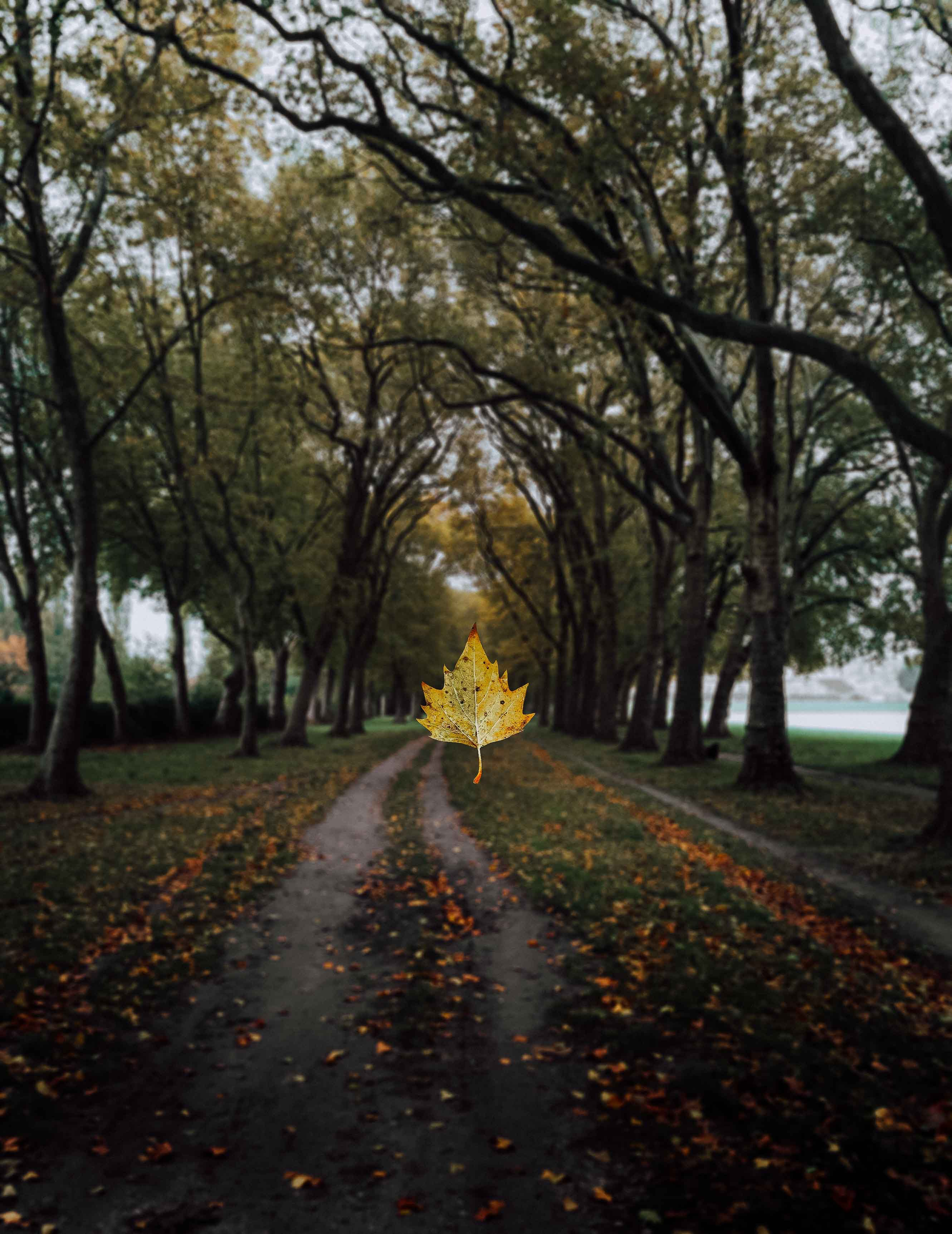 69272 download wallpaper Nature, Maple, Sheet, Leaf, Alley, Trees, Autumn screensavers and pictures for free