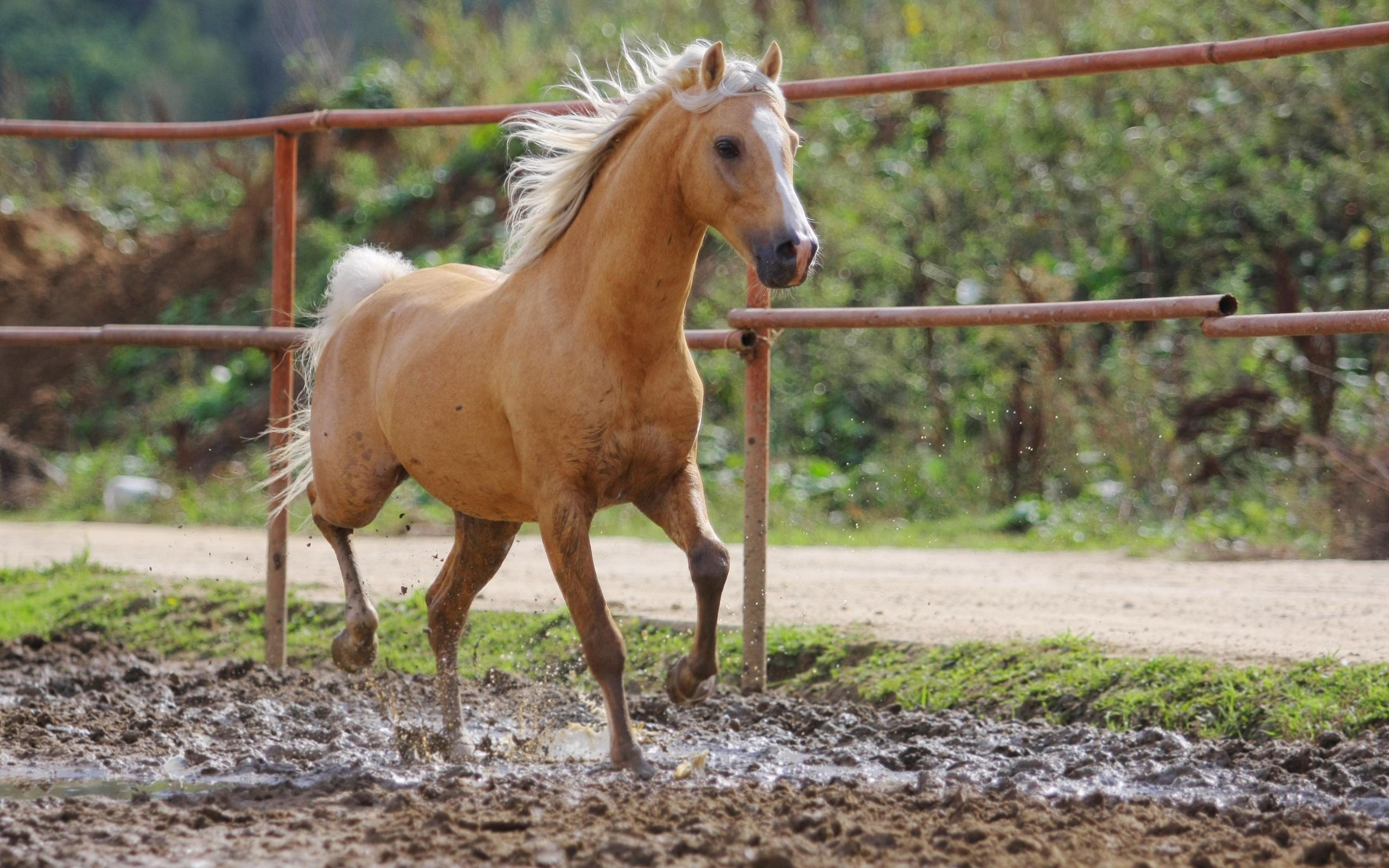 24768 Заставки и Обои Лошади на телефон. Скачать Лошади, Животные картинки бесплатно