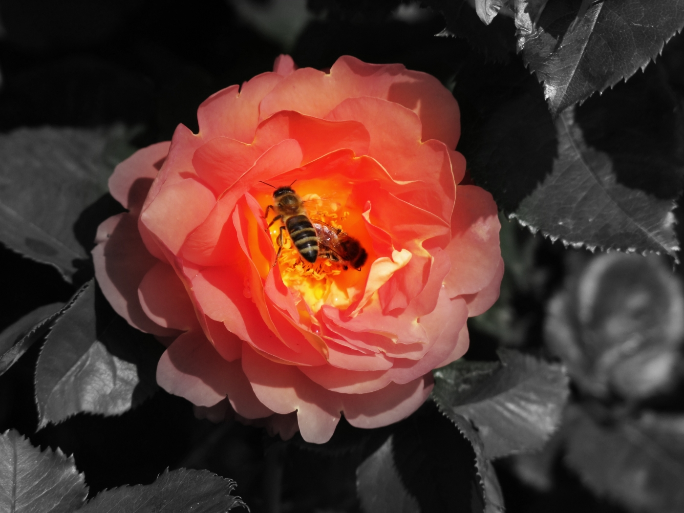 34367 Screensavers and Wallpapers Bees for phone. Download Insects, Bees pictures for free