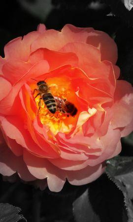 34367 Salvapantallas y fondos de pantalla Insectos en tu teléfono. Descarga imágenes de Insectos, Abejas gratis