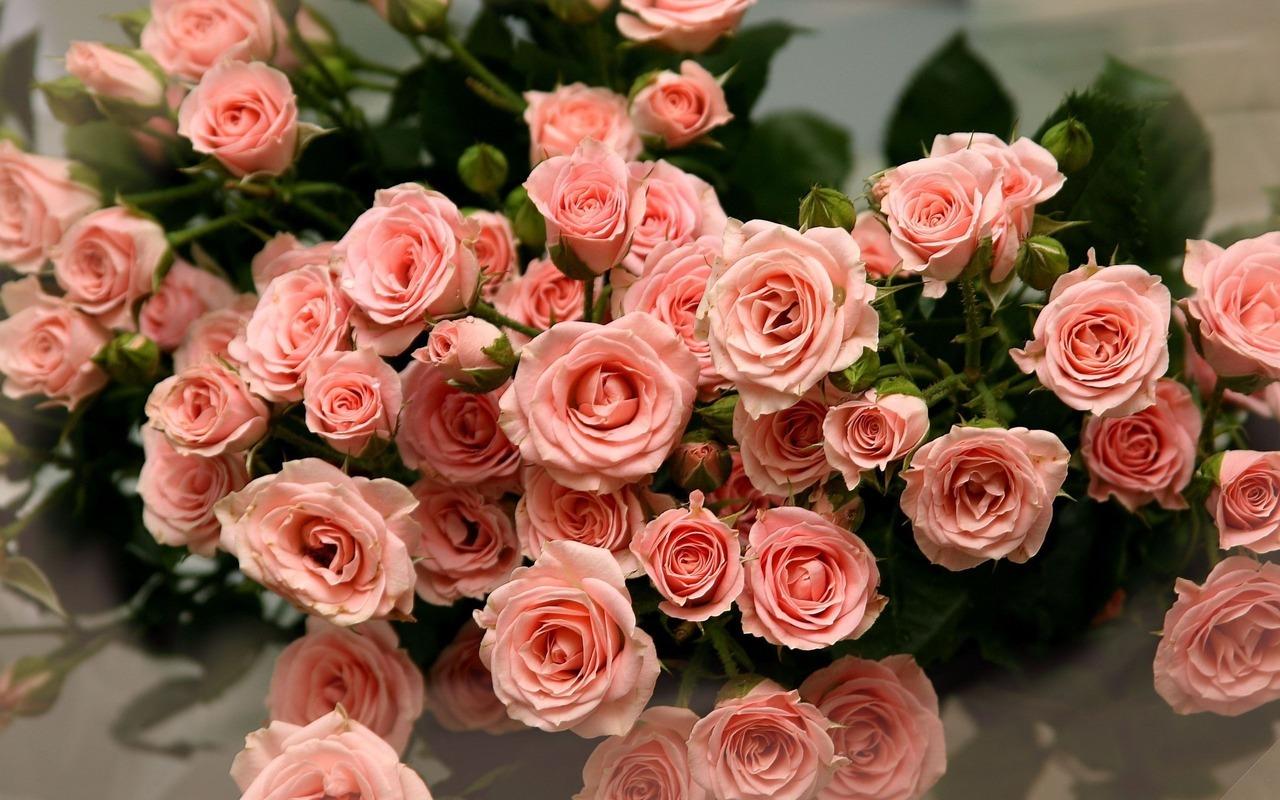 39746 Hintergrundbild herunterladen Pflanzen, Blumen, Roses, Bouquets - Bildschirmschoner und Bilder kostenlos