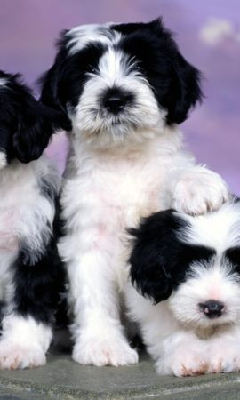 41064 baixar papel de parede Animais, Cães - protetores de tela e imagens gratuitamente