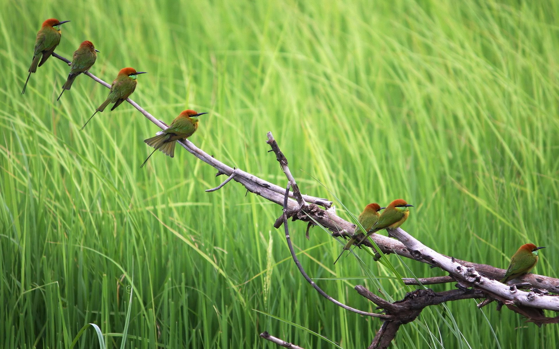 101608 Hintergrundbild 540x960 kostenlos auf deinem Handy, lade Bilder Tiere, Vögel, Grass, Holz, Sitzen, Baum, Farbe, Ast, Zweig, Herde 540x960 auf dein Handy herunter