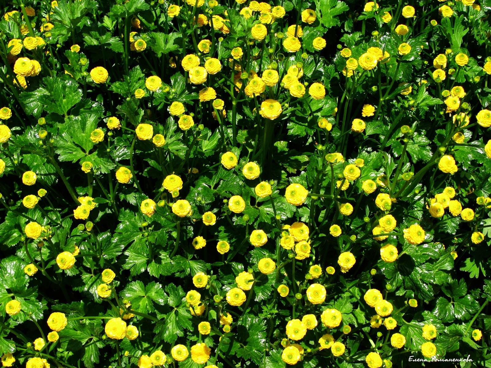 1406 скачать обои Растения, Цветы, Фон - заставки и картинки бесплатно