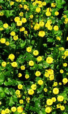 1406 descargar fondo de pantalla Plantas, Flores, Fondo: protectores de pantalla e imágenes gratis