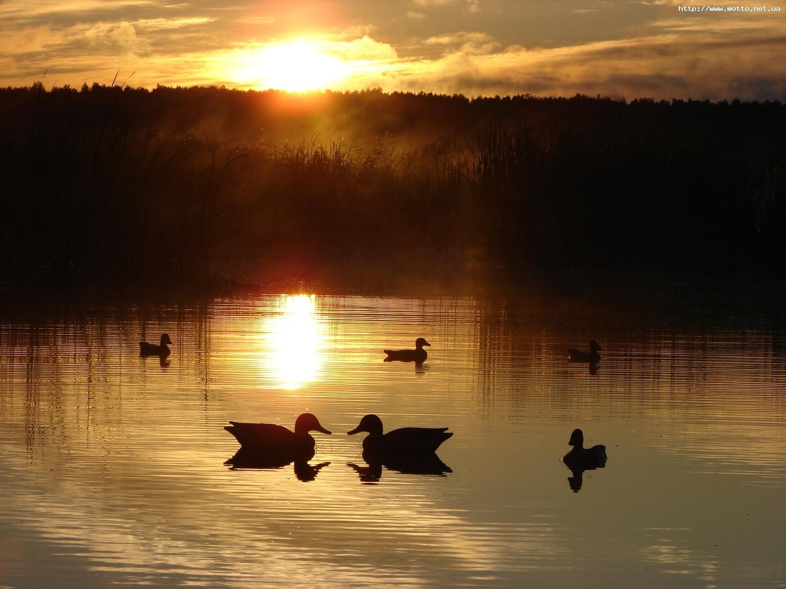 7328 скачать обои Пейзаж, Природа, Вода, Закат, Утки, Солнце, Озера - заставки и картинки бесплатно