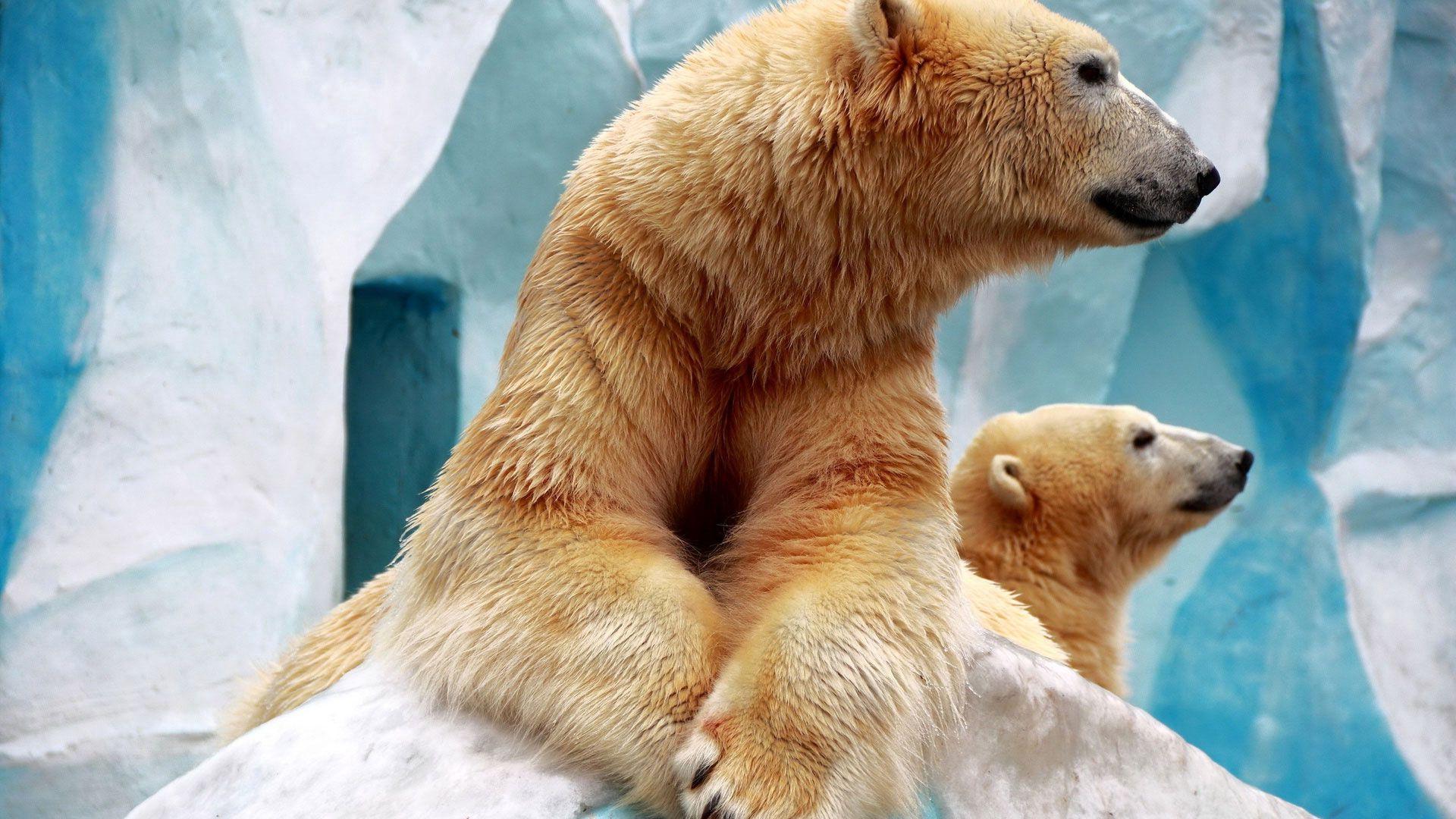 141713 Заставки и Обои Медведи на телефон. Скачать Животные, Медведи, Стена, Лапы, Шерсть, Зоопарк картинки бесплатно