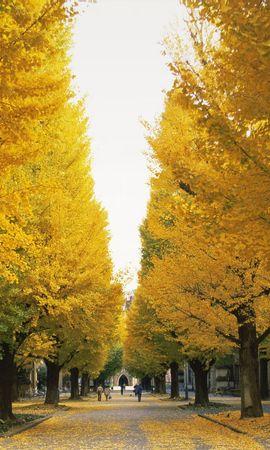 24450 скачать обои Пейзаж, Деревья, Осень, Листья, Улицы - заставки и картинки бесплатно