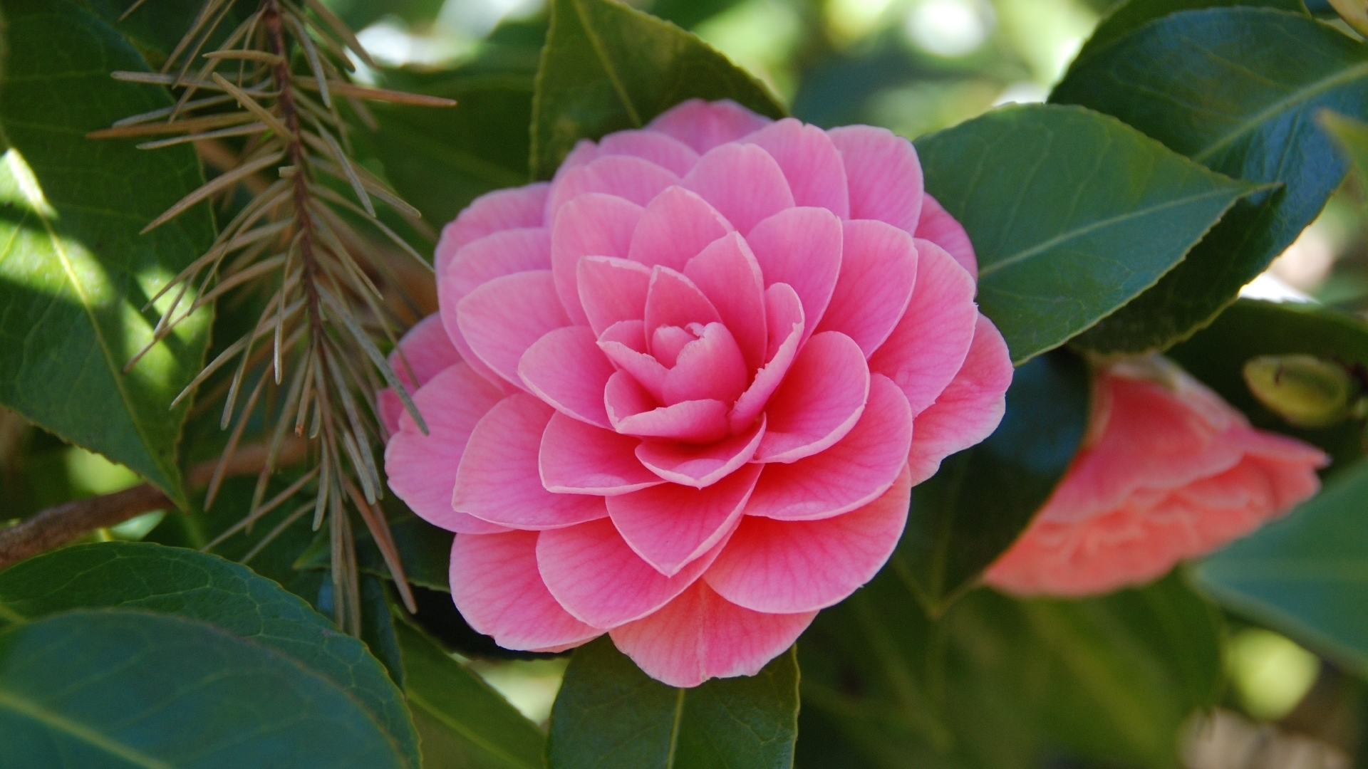 20169 скачать обои Растения, Цветы - заставки и картинки бесплатно