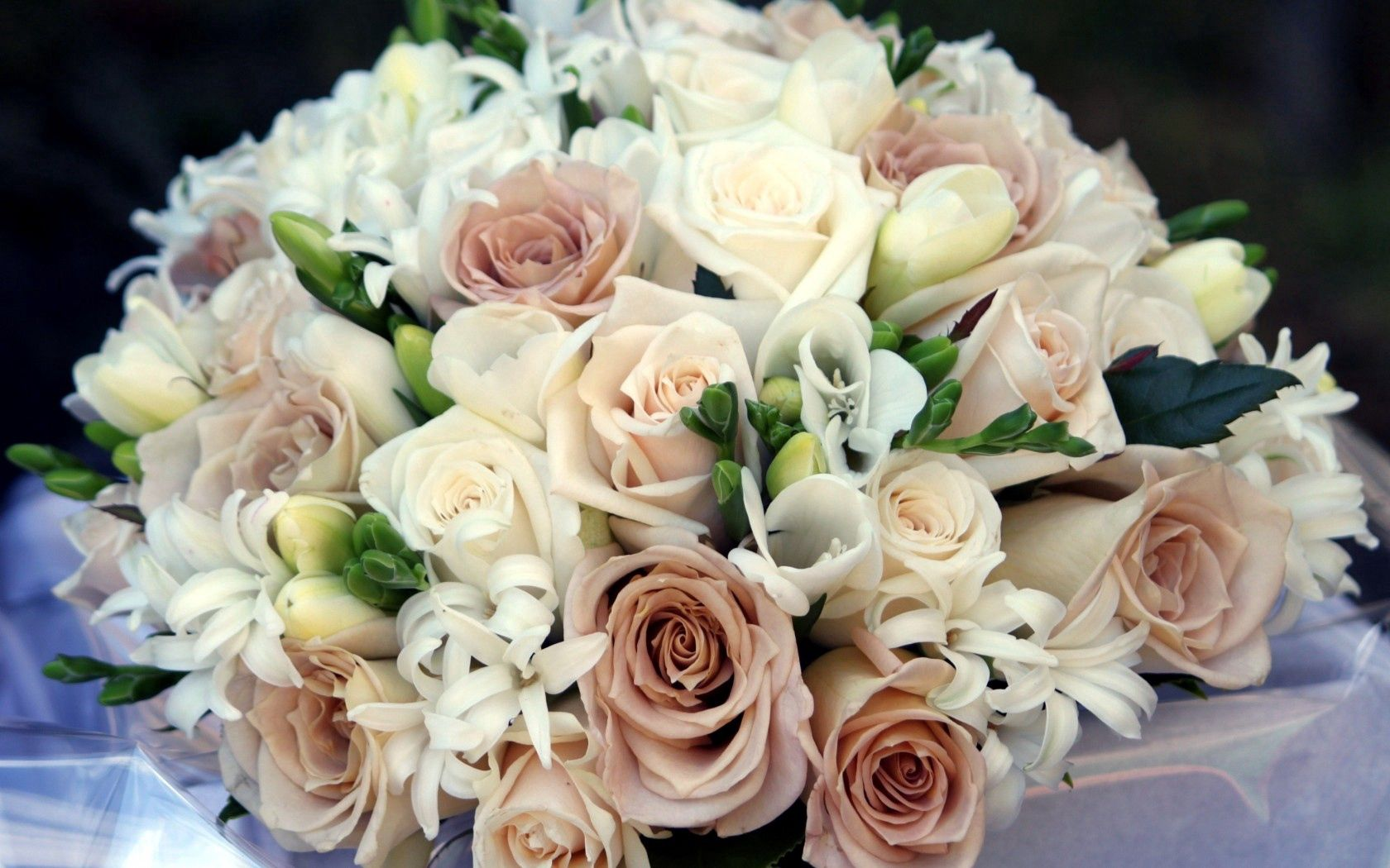 60485 download wallpaper Flowers, Roses, Bouquet, Composition, Freesia, Freesias screensavers and pictures for free