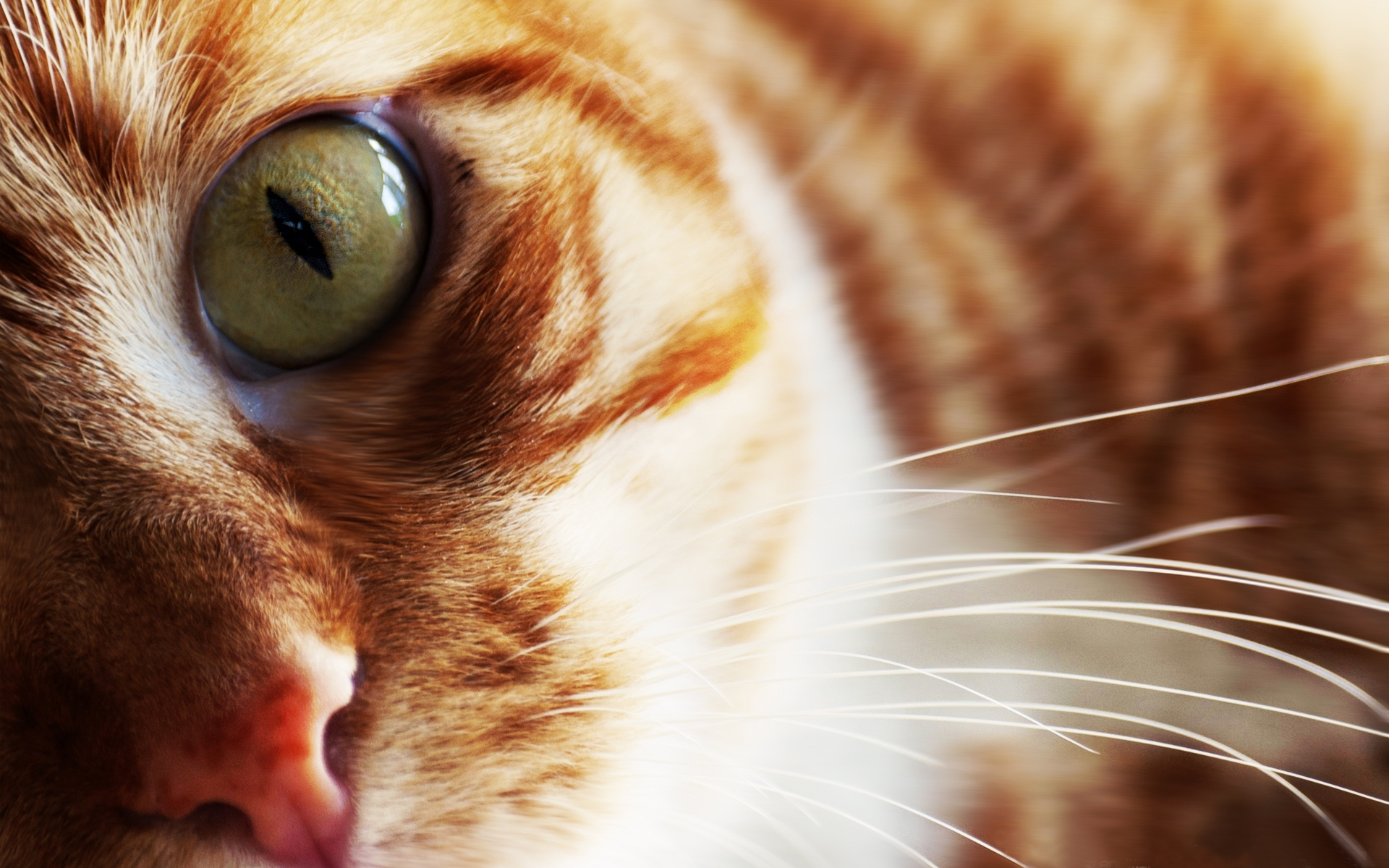 49584 download wallpaper Animals, Cats screensavers and pictures for free